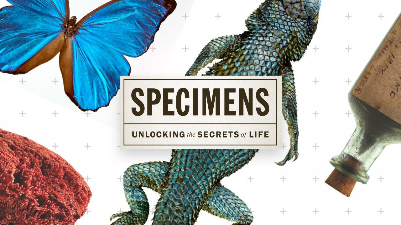 Specimens: Unlocking The Secrets Of Life How To Fill Out
