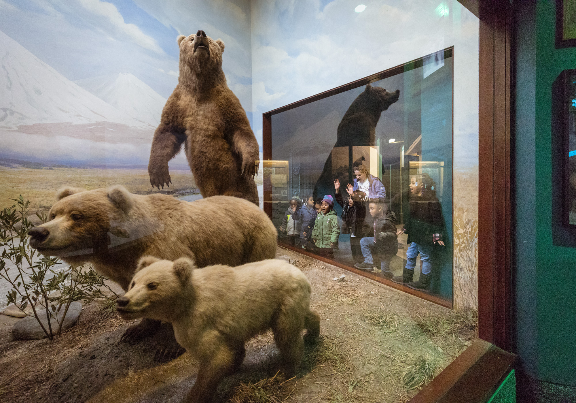 Students gather around a window to peer into a diorama featuring three bears in their natural habitat.
