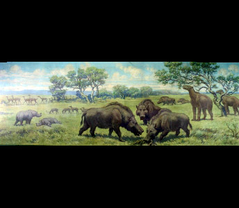Groups of prehistoric mammals are scattered across a vast plain in this Charles Knight mural. Included are camels, Oxydactylus; two-horned rhinoceros, Menoceras; three-toed horse, Parahippus; giant pig, Dinohyus and the clawed mammal, Moropus.