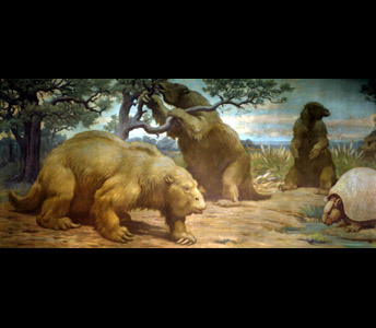Three nearly elephant-sized ground sloths, Megatherium dominate this Charles Knight painting. One reaches up to pulls leaves from a tree, while an armadillo-like Glyptodon stands to the right.