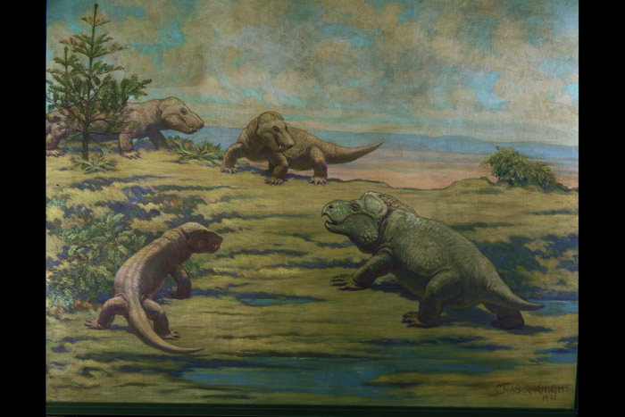 In this Charles Knight mural, three carnivorous Cynognathus prepare to attack the virtually defenseless Kannemeyeria.