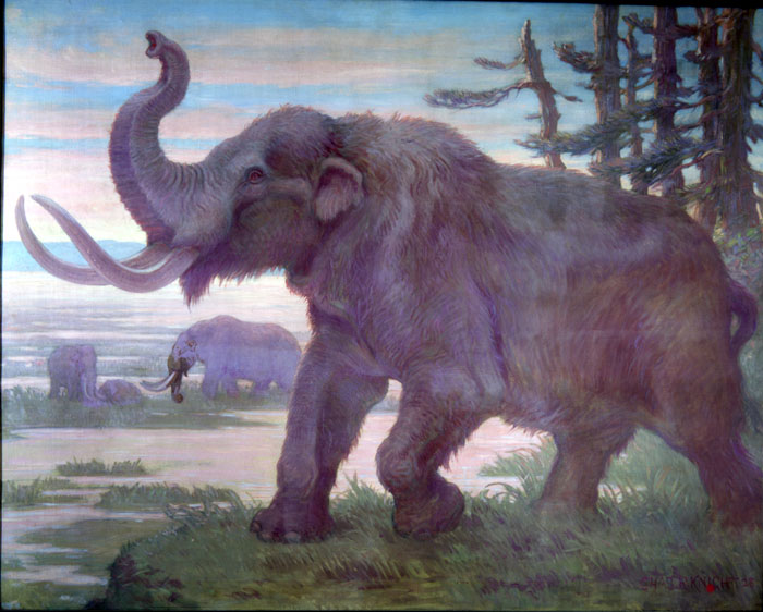 An American Mastodon, with it's trunk raised, dominates the foreground, while two others wander the landscape in the distance.
