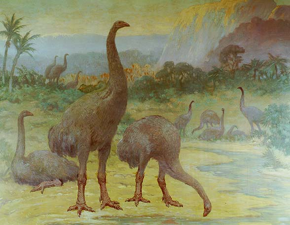 Two giant moas, or Dinornis, stand along a winding creek, one with it's head down to drink. A third sits on the ground behind them, while two more groups are seen in the distance.
