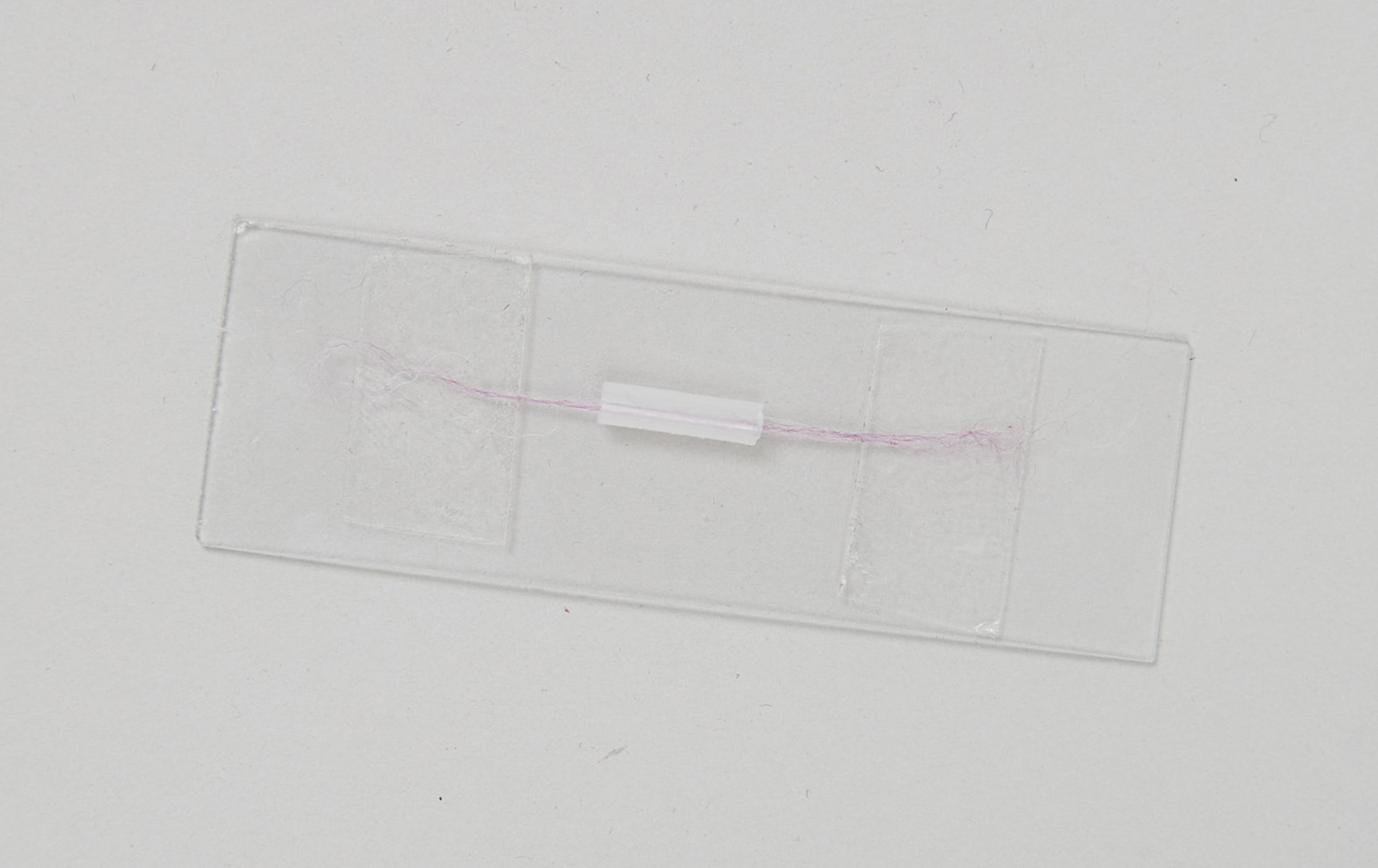 Fiber mounted on microscope slide.  The fiber is threaded though the section of transfer pipette and held taut with double-sided tape at either end.