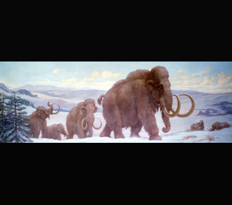 A Charles Knight mural of a herd of woolly mammoths roaming a frozen landscape, while two woolly rhinoceros keep watch.