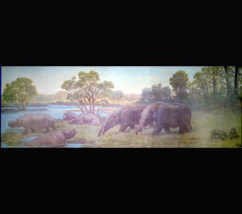 A Charles Knight panorama showing the swamp dwelling rhinoceros Teleoceras, the mastodont Gomphotherium, and the pig-like oreodont Ustatochoetus.