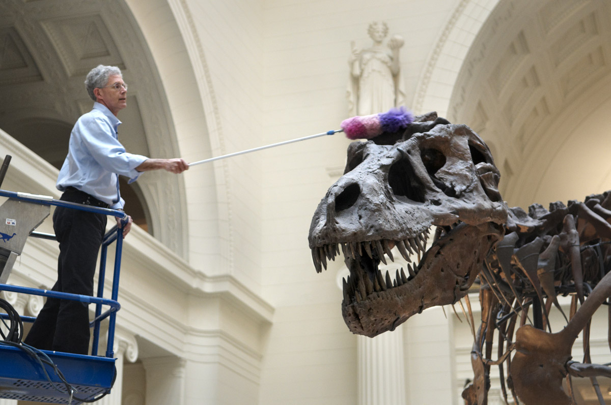 SUE the T.rex is cleaned with a feather duster by paleontologist and collection manager Bill Simpson, who uses a lift to reach SUE's head.