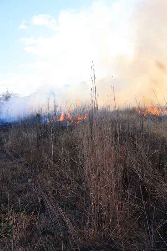 Tall grass with fire and smoke in the background