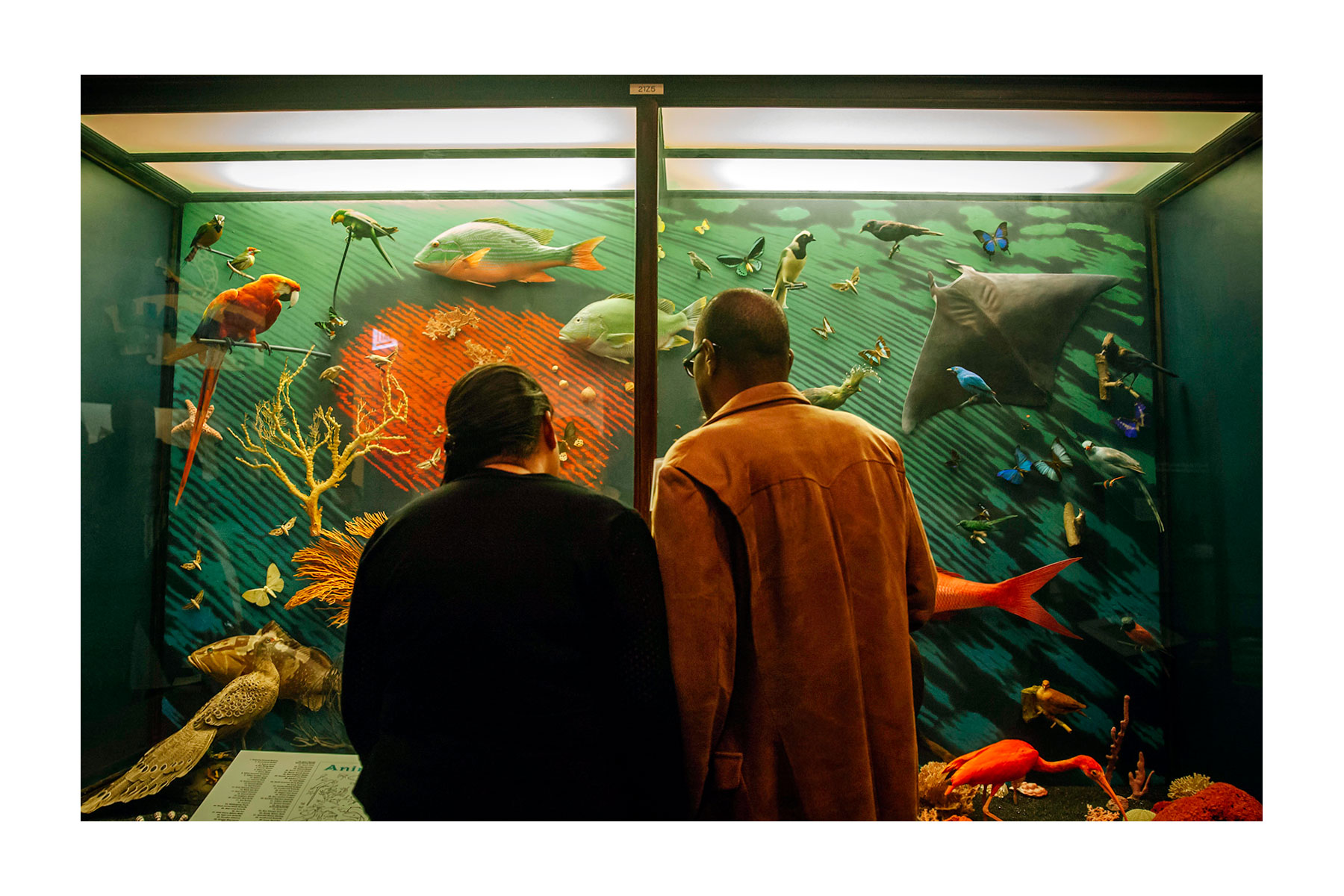 Two people look inside a diorama case containing fish, birds, and other animals.