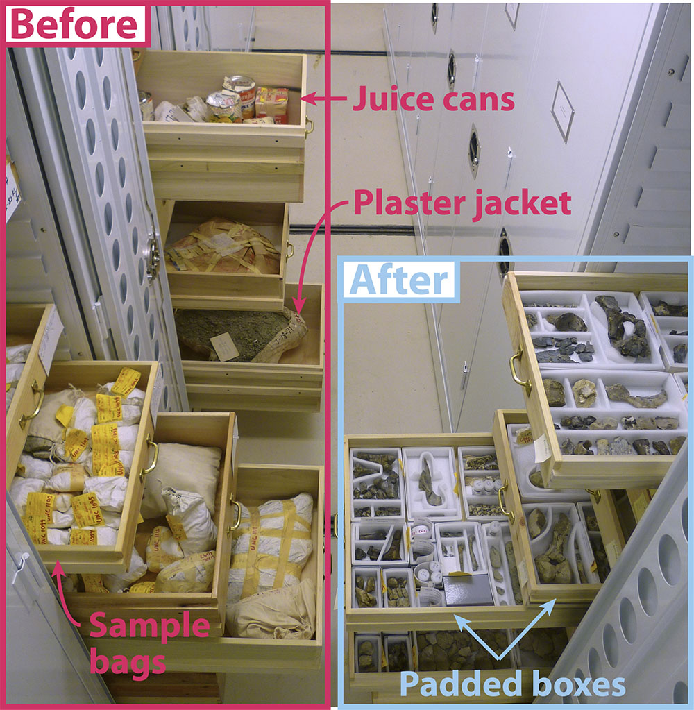 Pulled-out drawers contain fossils and specimens. Text and arrows point out that these objects used to be wrapped up in boxes and bags and are now carefully arranged.