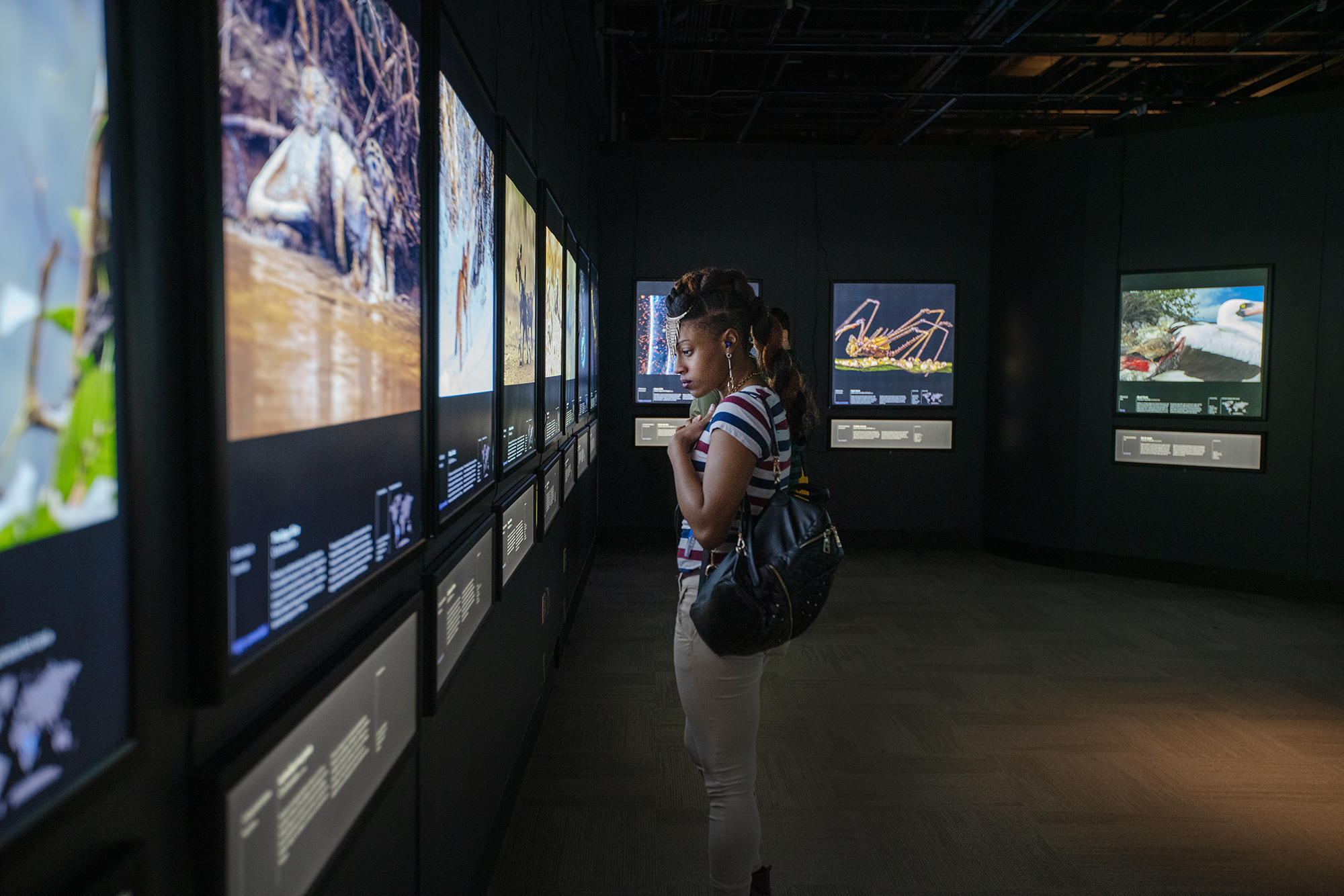 A woman stands in a dark gallery, reading the information below one of several large nature photographs. The images are backlit and cover two walls that meet at a corner in the background. Behind the woman is a photo of a large spider-like animal and a photo of a black-and-white sea bird.