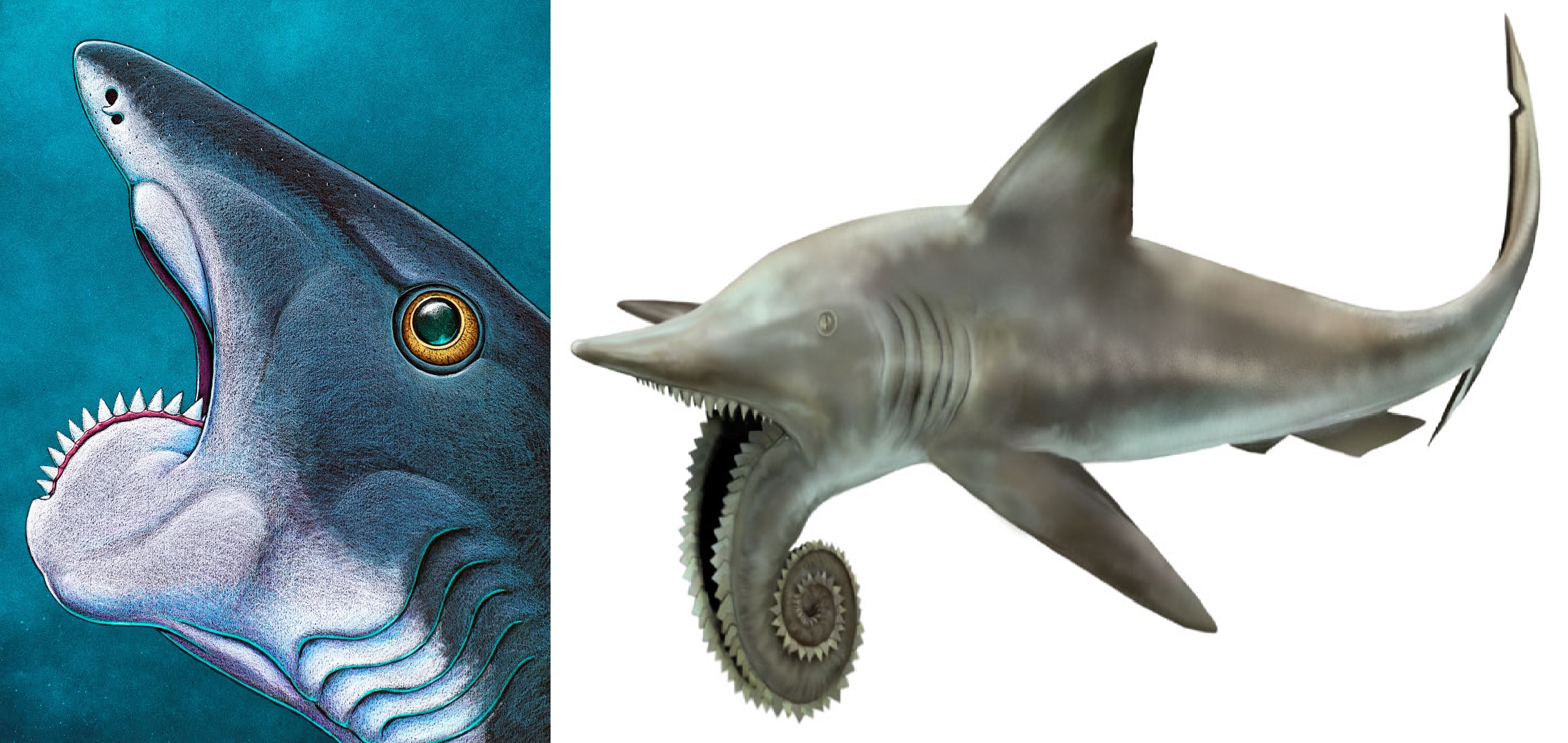Four fossil sharks that are cooler than megalodon field museum four fossil sharks that are cooler than megalodon altavistaventures Images