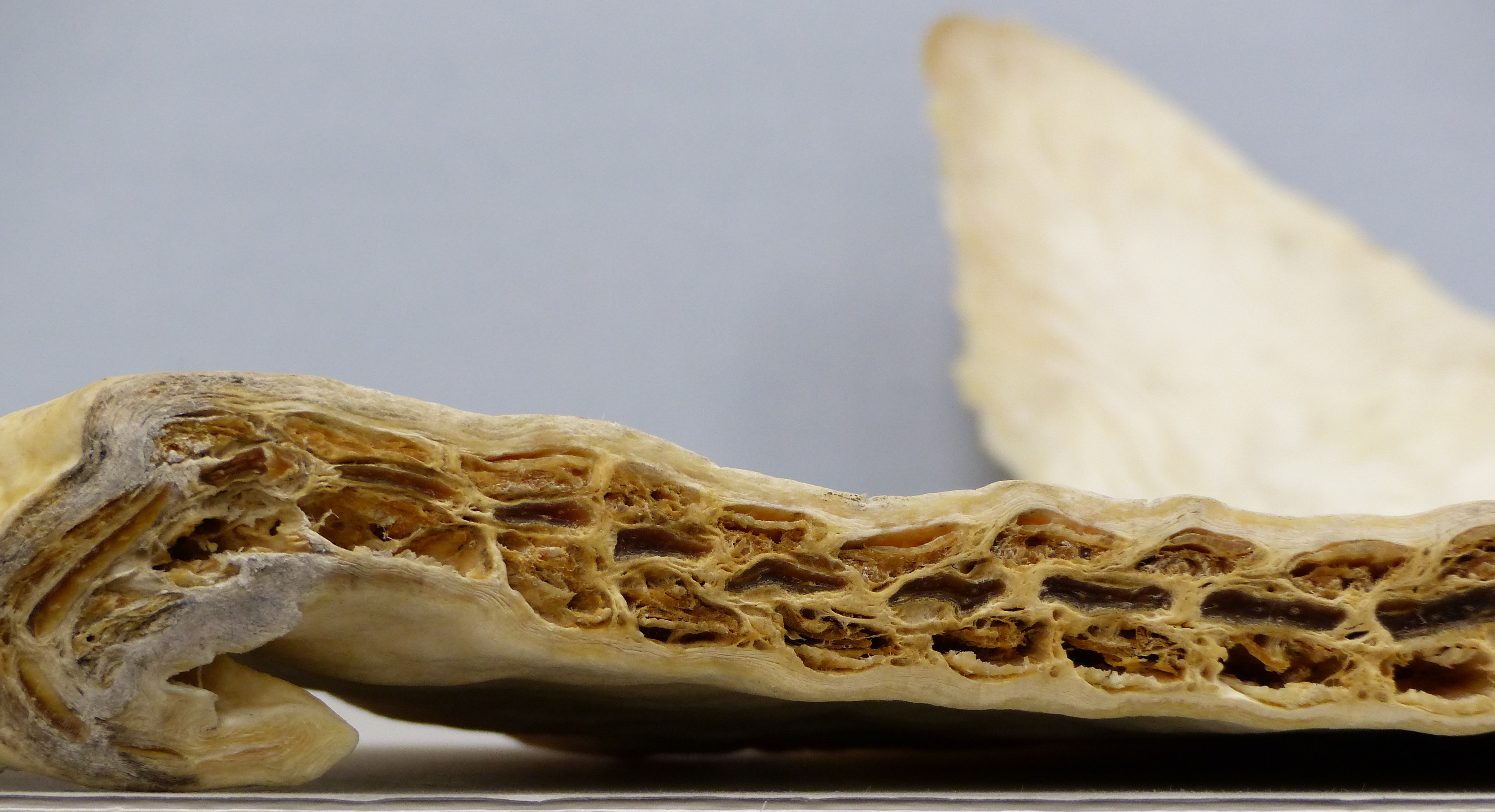 Close-up of a white and yellow honeycomb-like structure