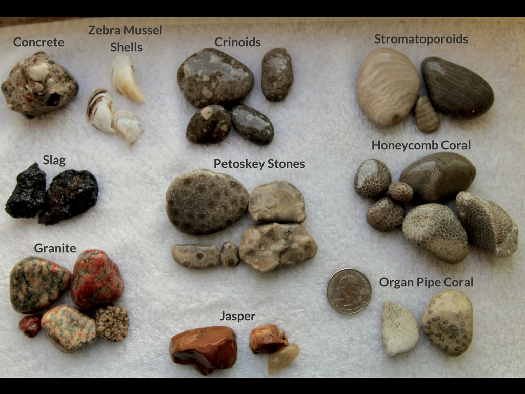 Beachgoer S Guide To Lake Michigan Fossils And Rocks