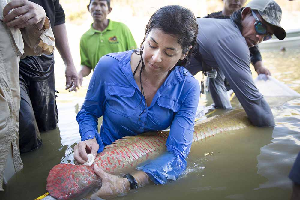 Woman in a blue shirt standing in water, holding a large tan and red fish near the surface