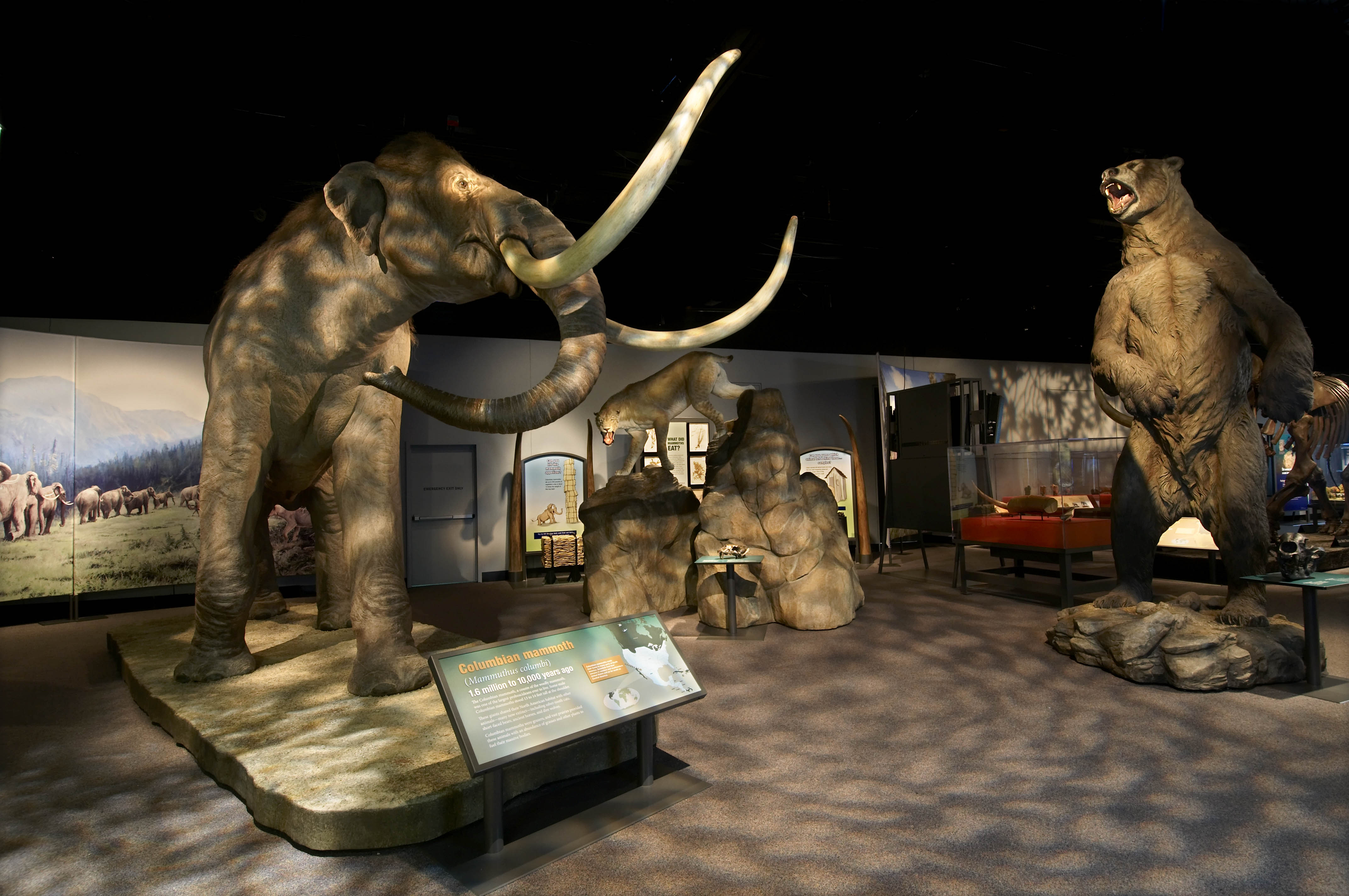 View of the Mammoths and Mastodons exhibition, including a live-size mammoth in the foreground.