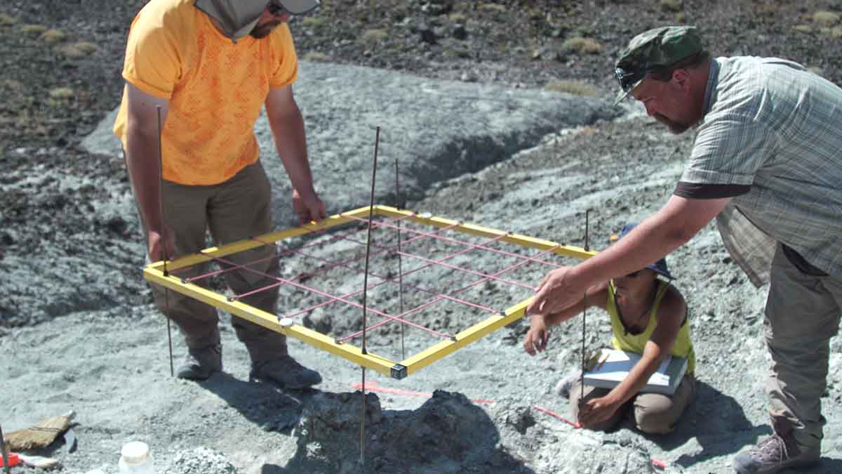 Three people carefully position a metal grid over a fossil dig site