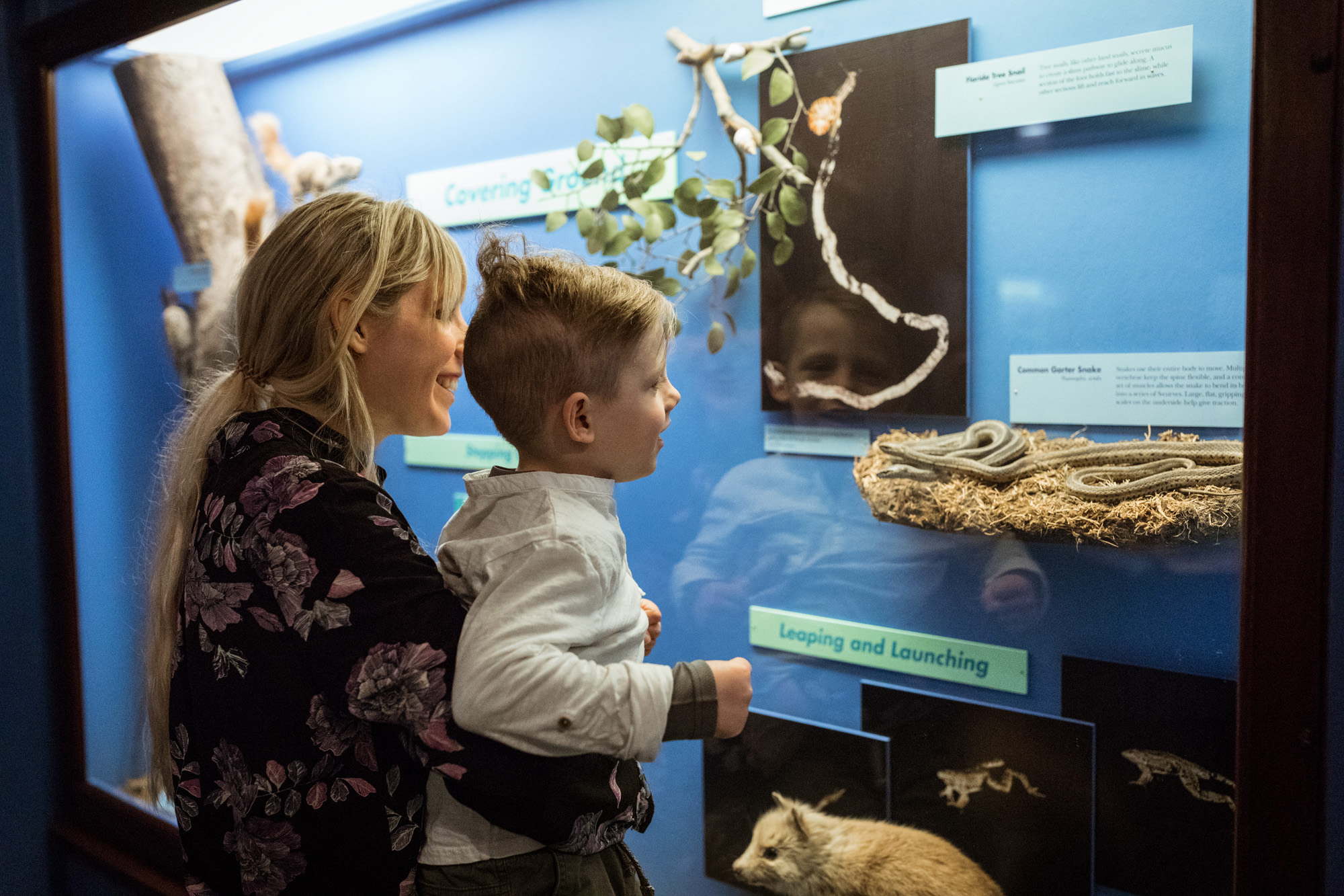 A woman holds up a little boy as they look into a taxidermy case filled with snakes, squirrels, and another small mammal.