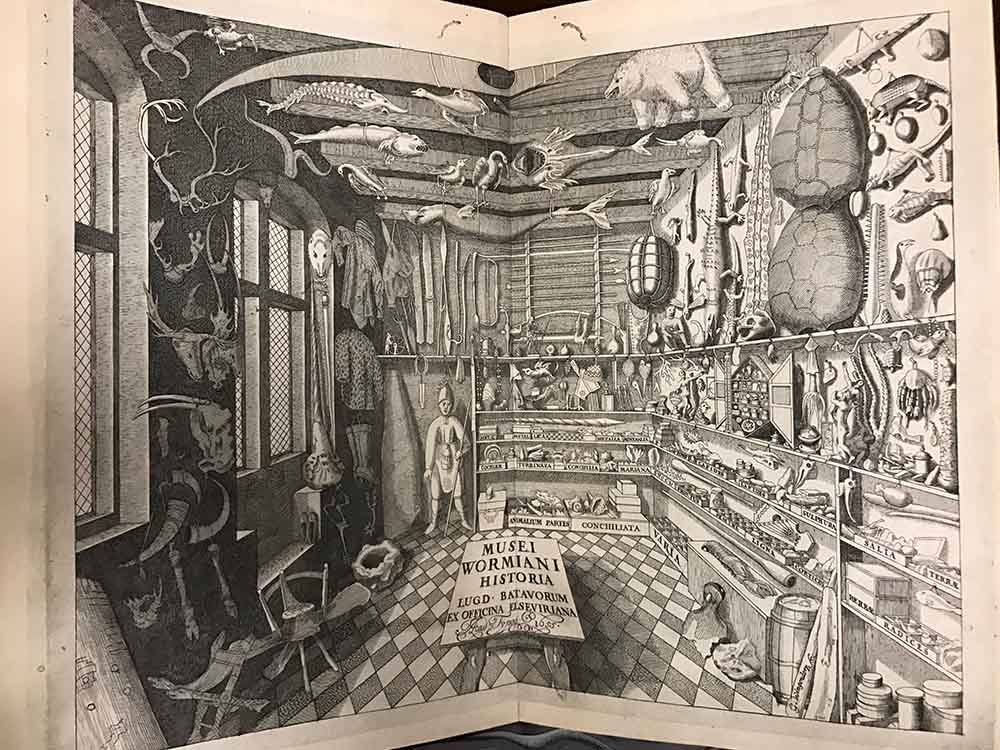 Black and white illustration of a room filled with many different types of objects, including bones, animals, rocks, and other artifacts