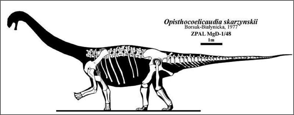 Black and white illustration of a partially complete, long-necked dinosaur
