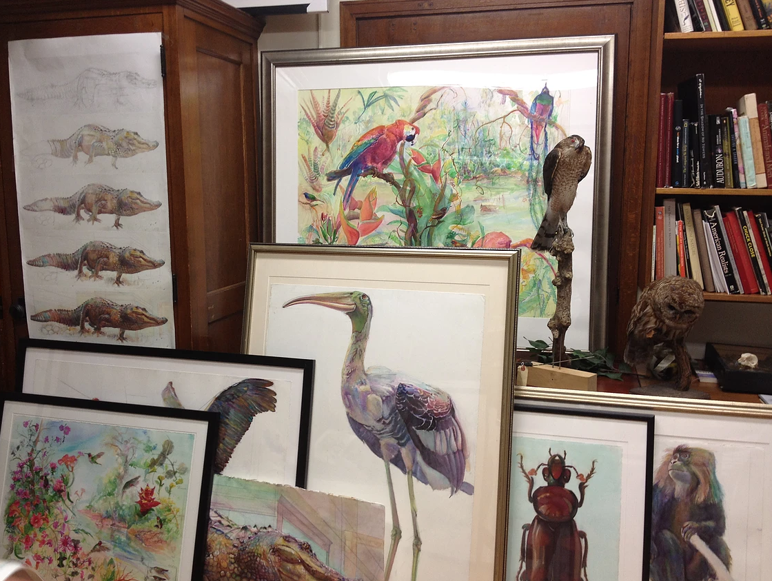 Paintings of various animals stacked up in an office, including birds, insects, a monkey, and a crocodile.
