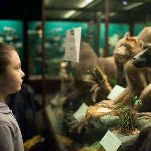 Child looking into the eyes of a monkey