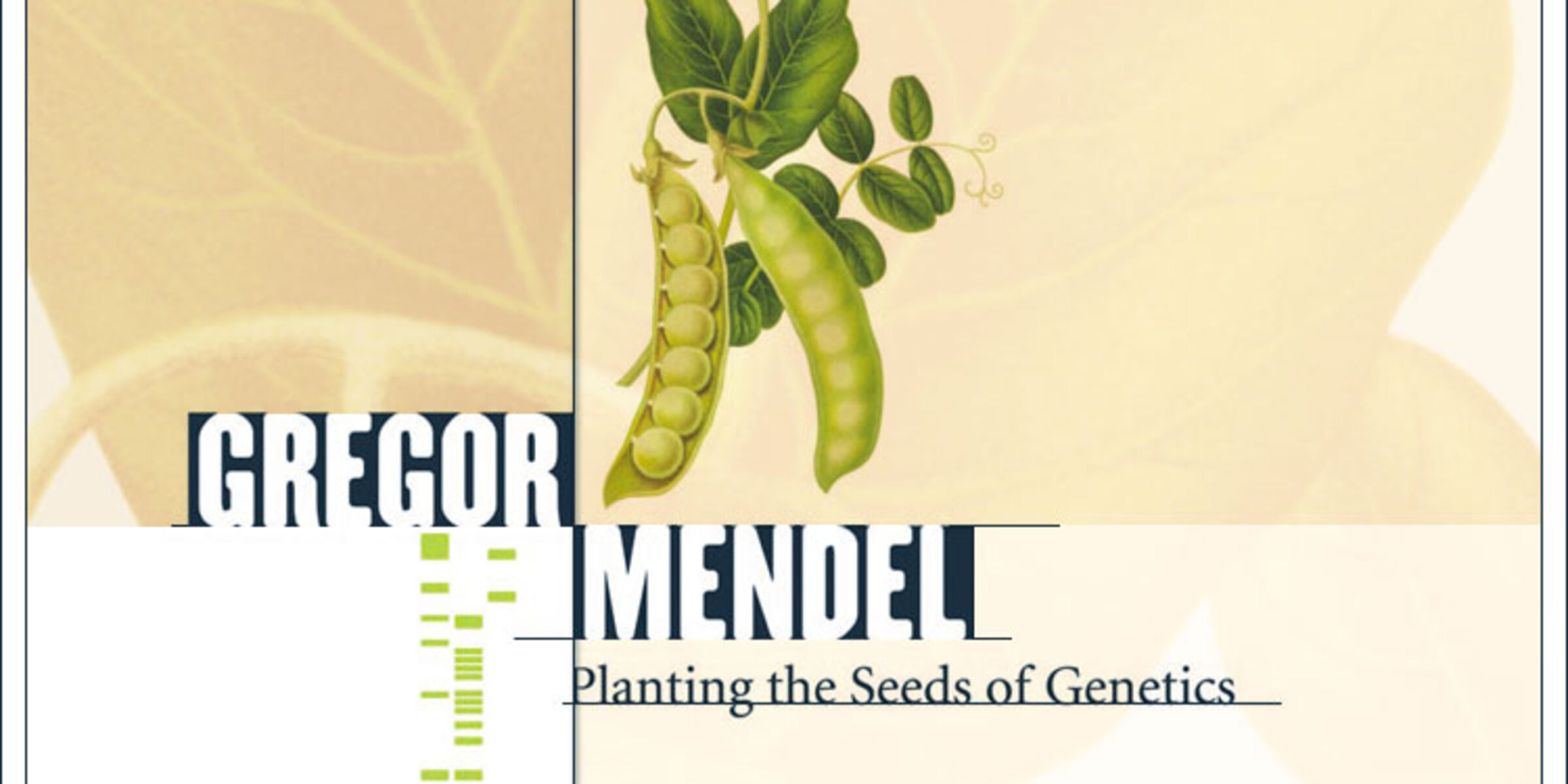 an overview of the gregor mendels influence on the genetic research on the plant hybrids