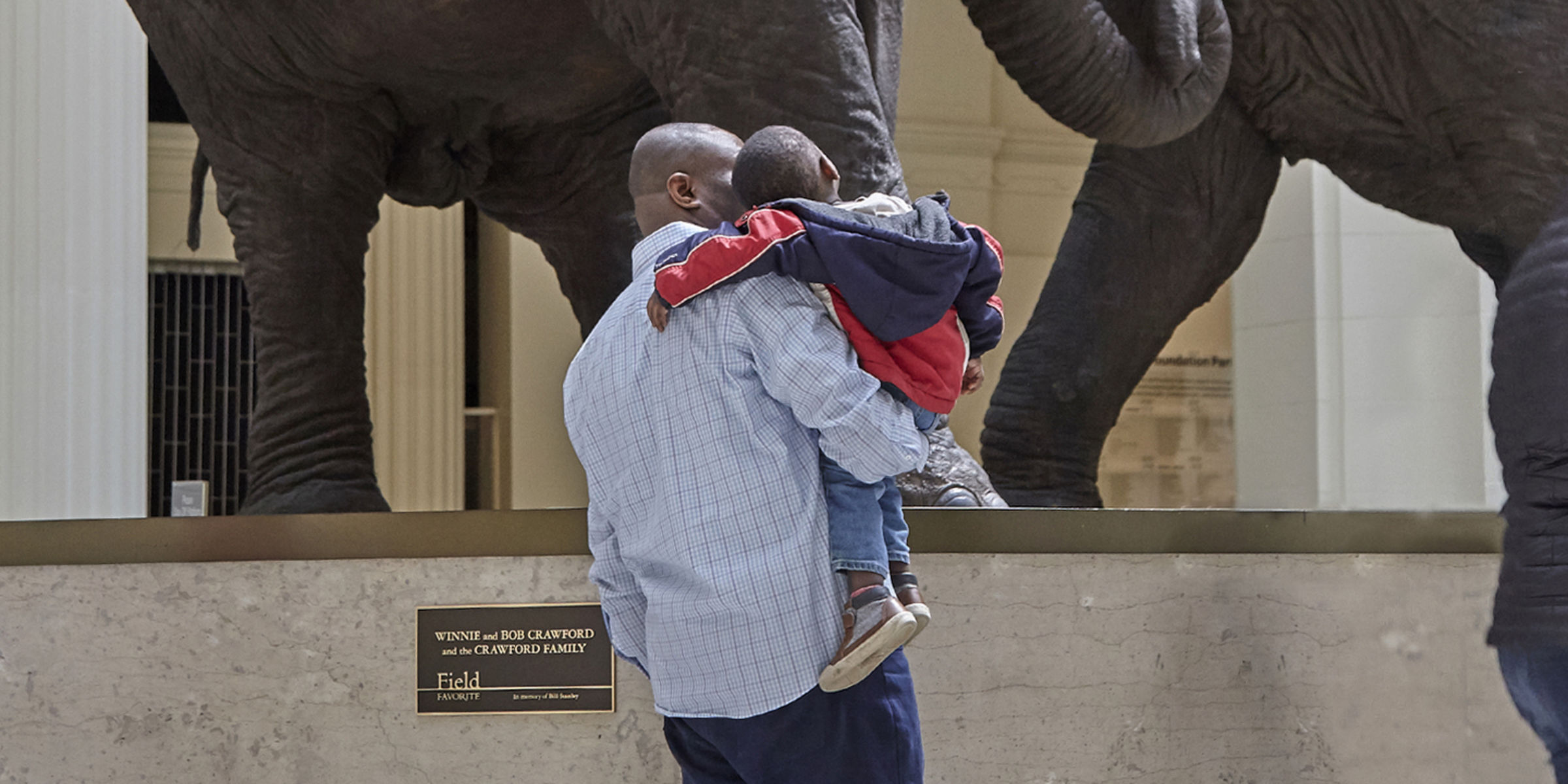 A father holds his son at his side while both look around Stanley Field Hall. They stand at the foot of the taxidermied elephants, their faces not visible to the camera.