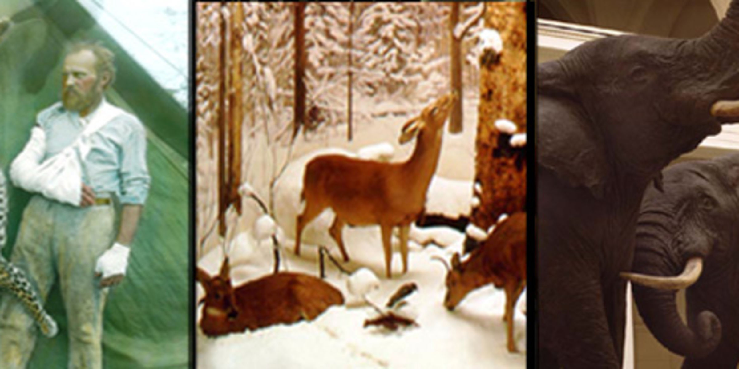 """A composite of three photographs related to taxidermist Carl Akeley: Akeley standing near a leopard he killed, one scene from the """"Four Seasons of the Deer"""" diorama, and a view of African elephants."""