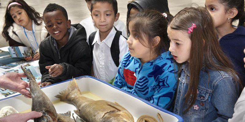 A group of students excitedly gathers around a fish specimen.