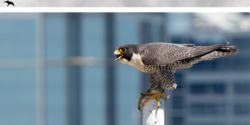 Peregrine Main Page Banner Clouds med light