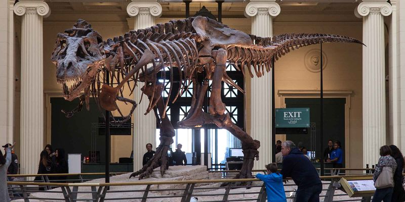 A large T. rex skeleton on display in a museum, with people looking at it and columns in the background