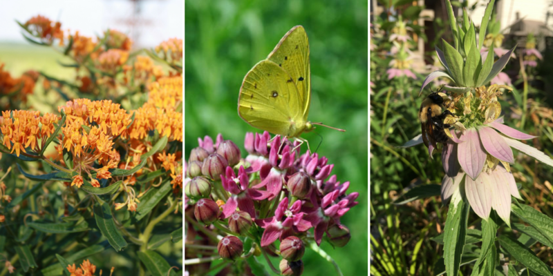 Three different kinds of flowers: small, bright orange flowers; bright pink flowers with a yellow butterfly perched on top; and a light pink flower with a bumblebee on it