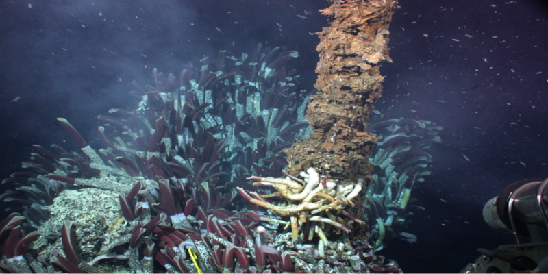 Colorful coral-like protrusions on the sea floor