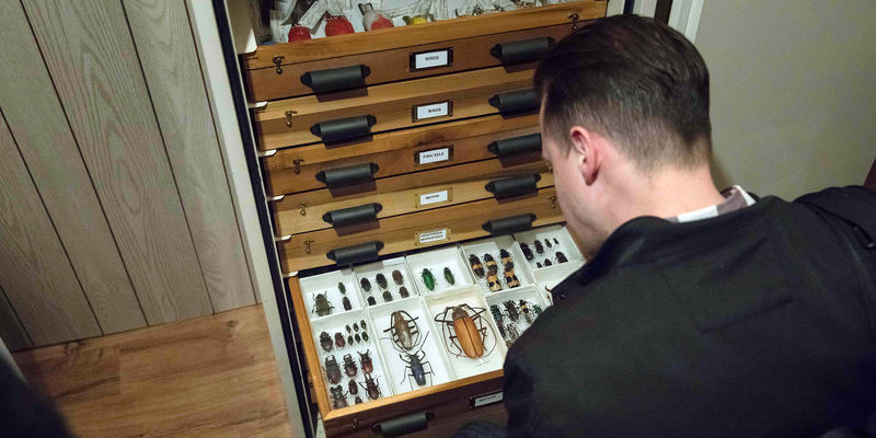 Looking over a man's shoulder at a collections draw of insect specimens
