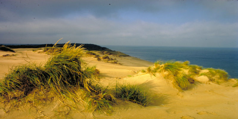 Sandy beach with grasses and water in the background