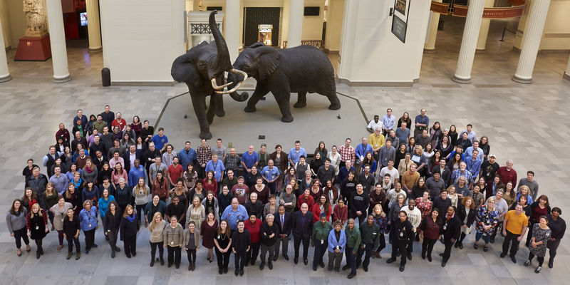 Field Museum staff standing in front of elephants on display in Stanley Field Hall