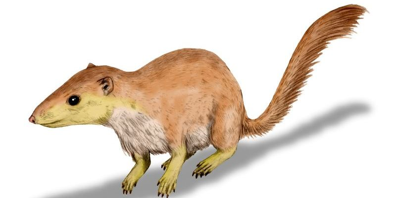 An artist's rendering of a Purgatorius unio, a small prehistoric mammal resembling a squirrel.