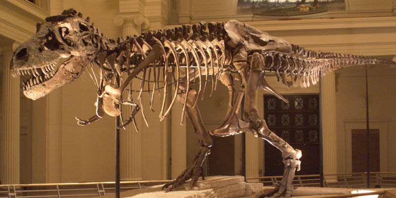 Fossil skeleton of SUE the T. rex