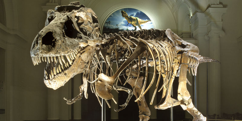 SUE the T.rex fossil skeleton