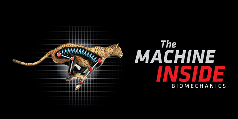 An artist rendering of a cheetah showing a spring mechanism in place of it's spine and leg bones with The Machine Inside, Biomechanics logo.