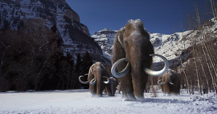 A group of wooly mammoths walking in the snow with mountains in the background