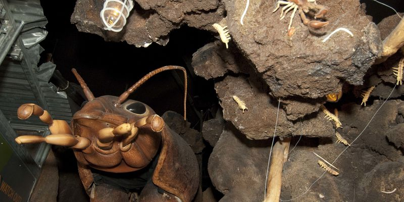 Oversize model of underground insects