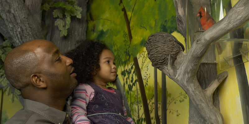 Man holding young girl, looking at a model bird nest and bird