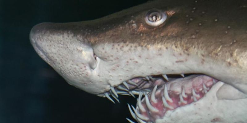 Baby Shark Cannibals: The Ultimate Sibling Rivalry | The Field Museum