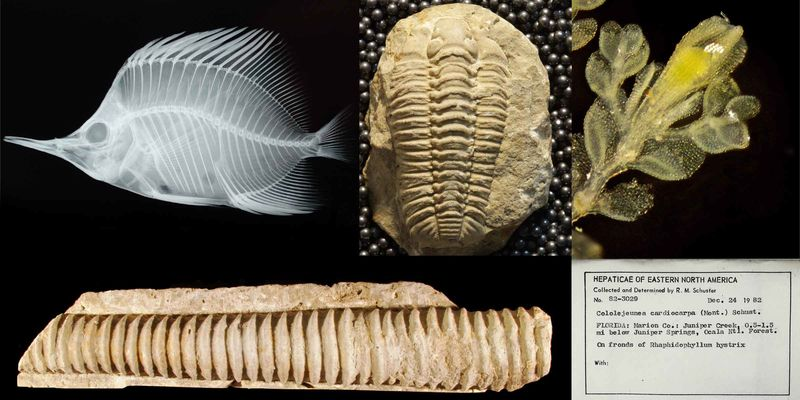A series of natural history specimens, including a fish, fossils, plant, and scientific label