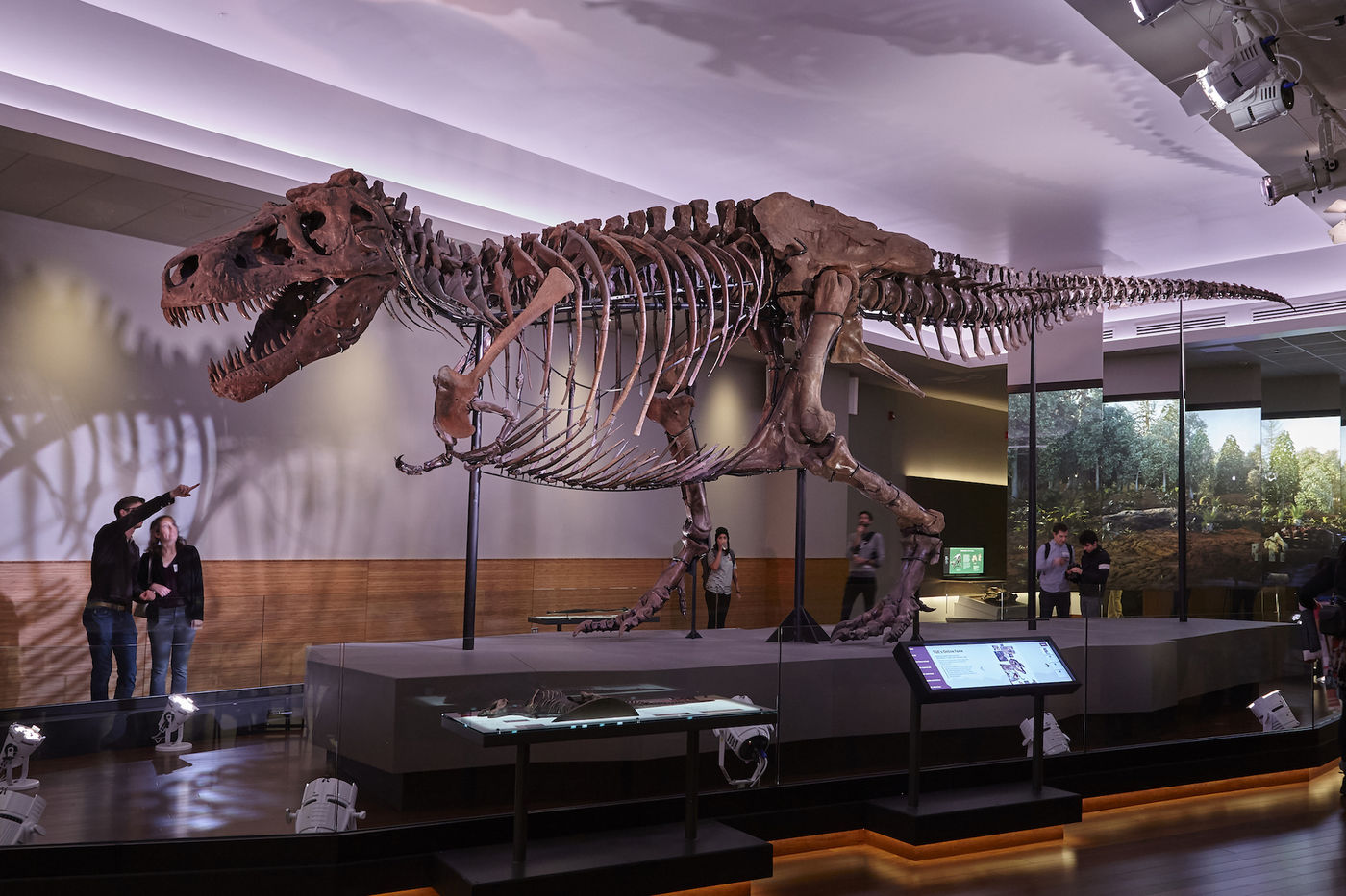 Two people look up at the skeleton of SUE the T. rex. Behind the dinosaur, several panels show scenes from a forest.