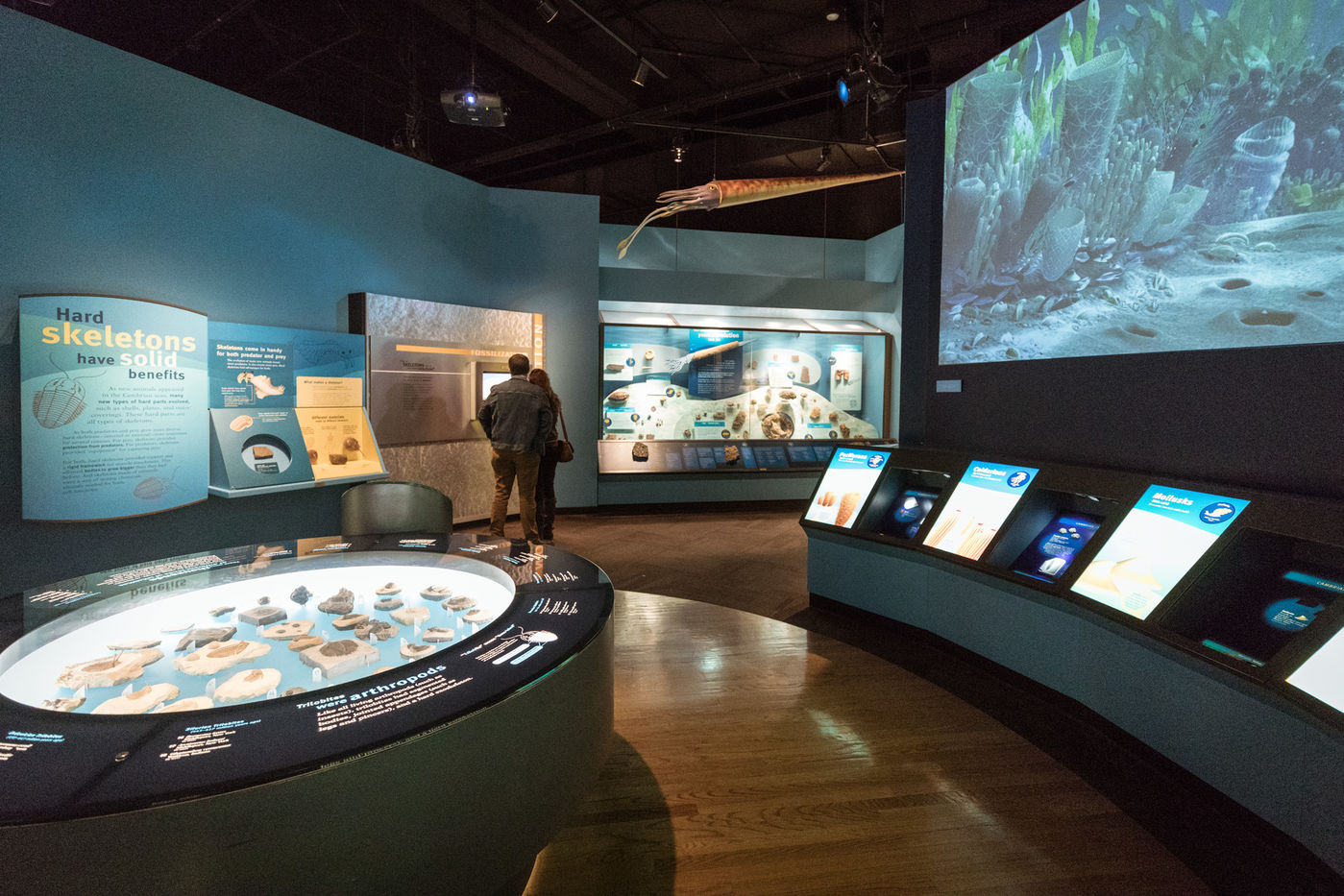 View of Evolving Planet exhibition, with two people looking at a digital screen. In the foreground are a display of fossils and a projection showing what Cambrian oceans might have looked like.