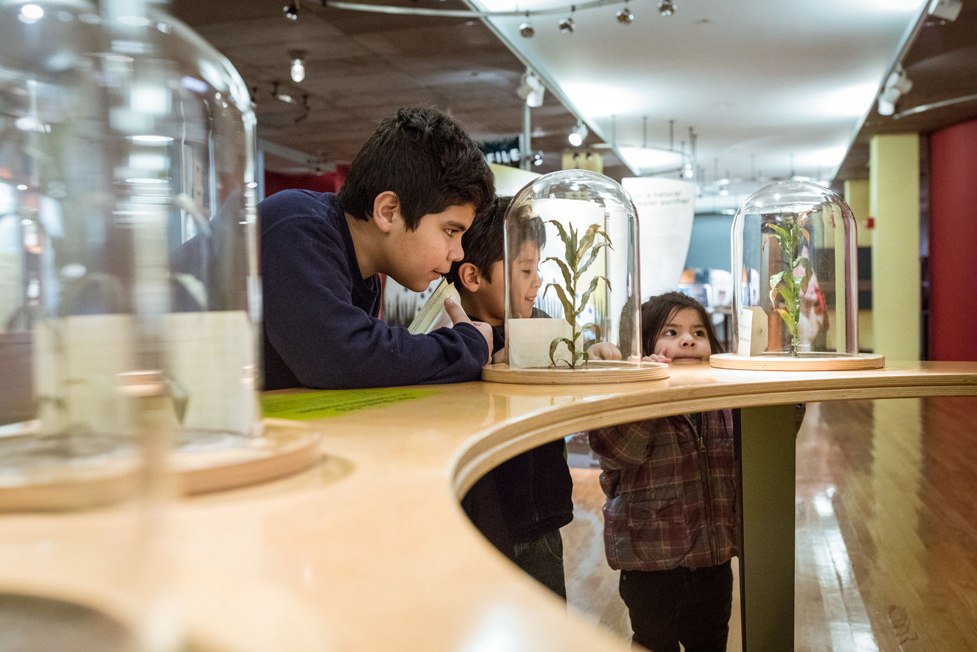 Two boys and a girl look closely at models of plants on display under glass domes on top of a table.