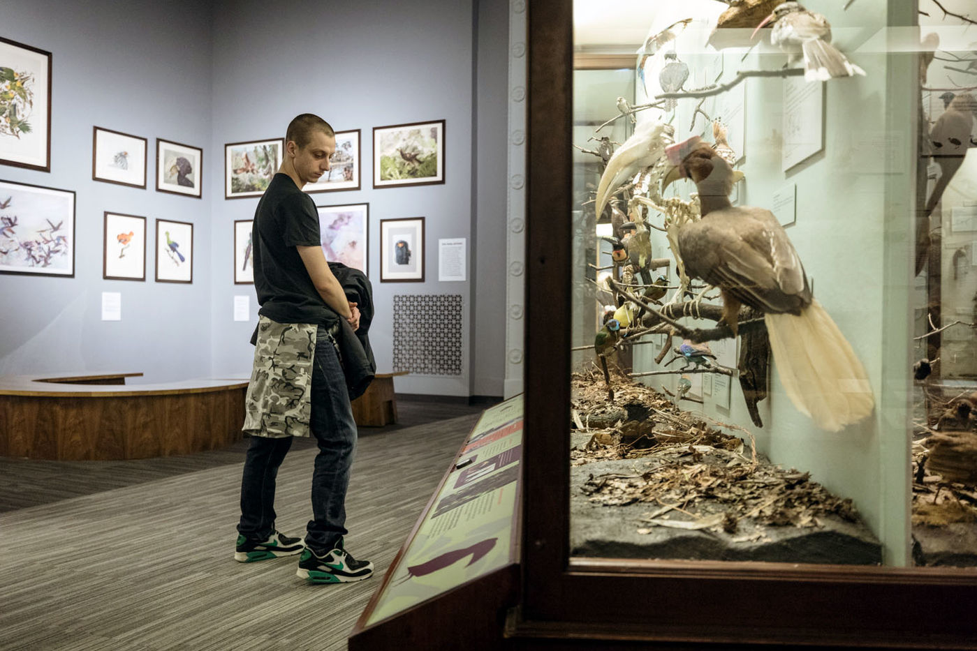A young man studies the label on a display case filled with birds. Behind him are artists' depictions of birds from around the world.